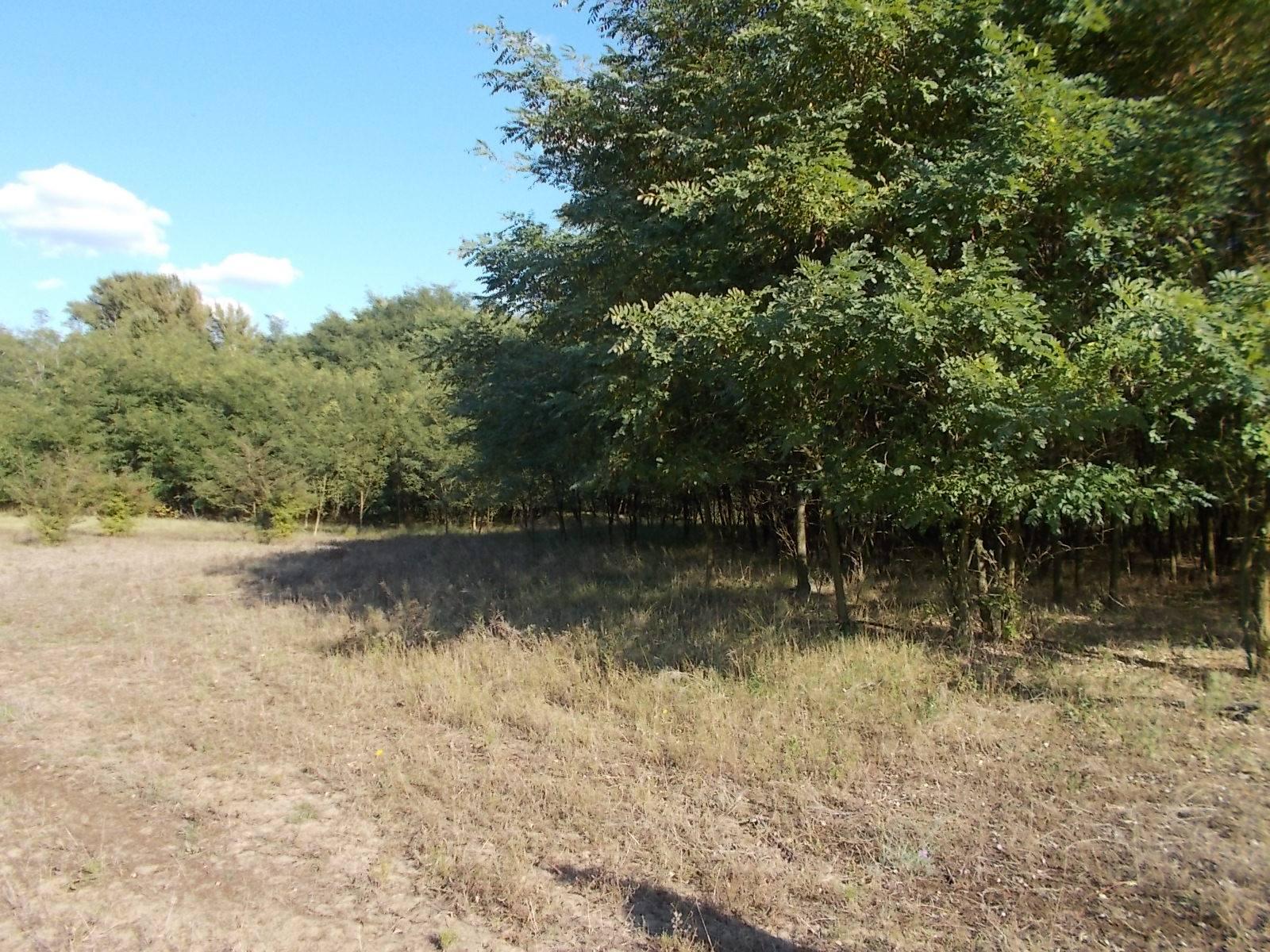 Eladó Lajosmizsén szántó, erdő